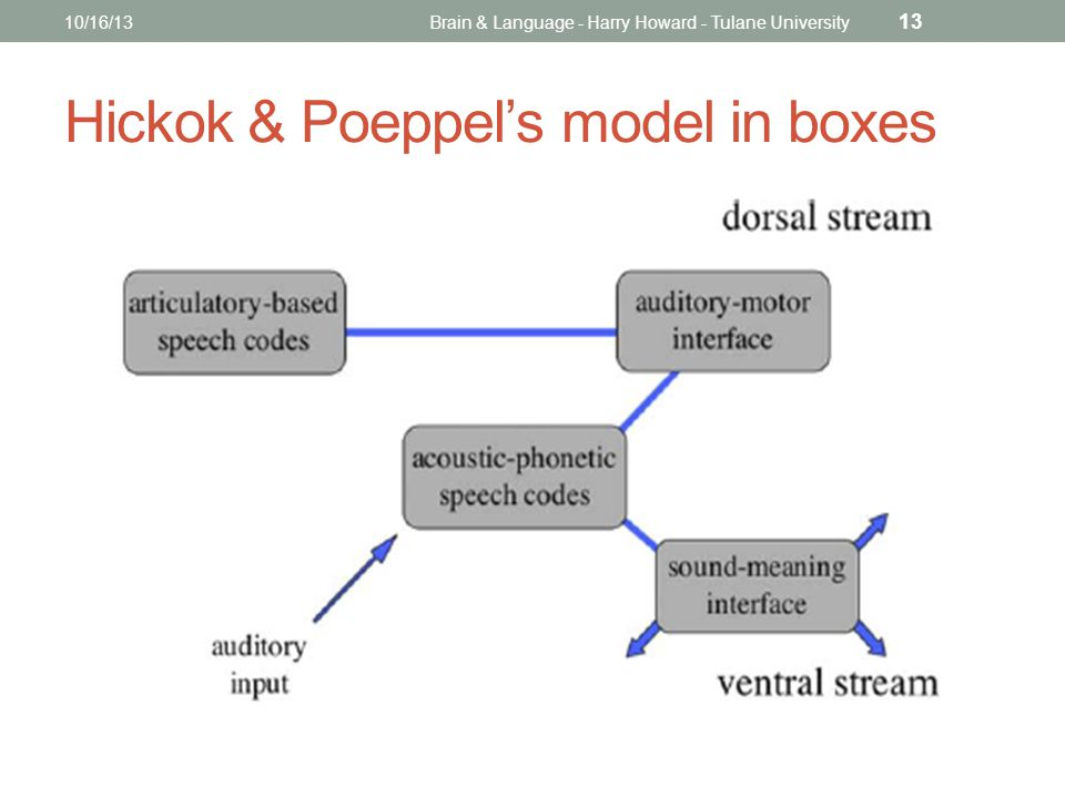 10/16/13Brain & Language - Harry Howard - Tulane University 13 Hickok & Poeppel's model in boxes