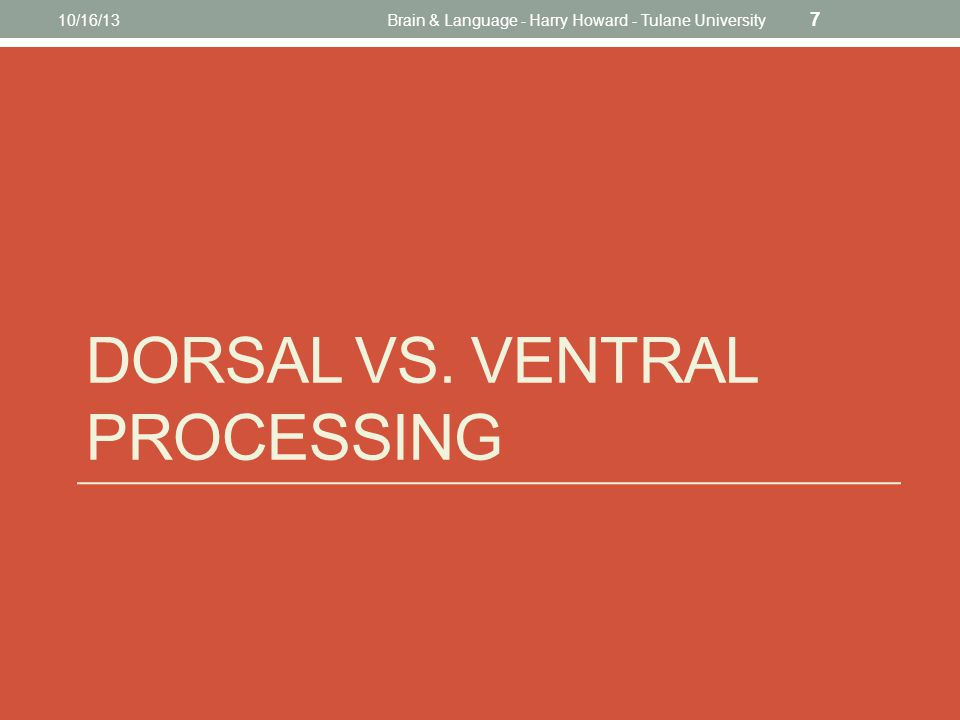 DORSAL VS. VENTRAL PROCESSING 10/16/13Brain & Language - Harry Howard - Tulane University 7