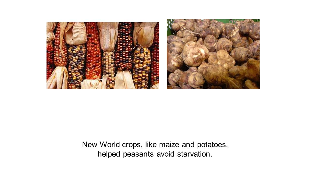 New World crops, like maize and potatoes, helped peasants avoid starvation.