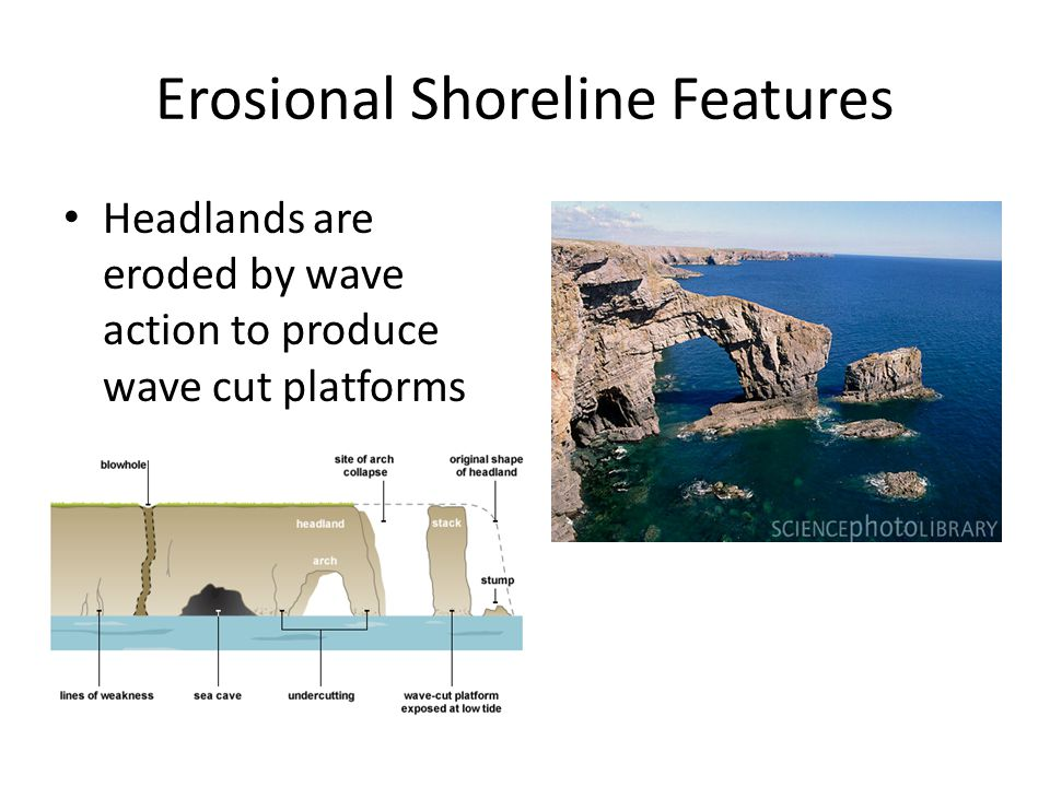 Erosional Shoreline Features Headlands are eroded by wave action to produce wave cut platforms