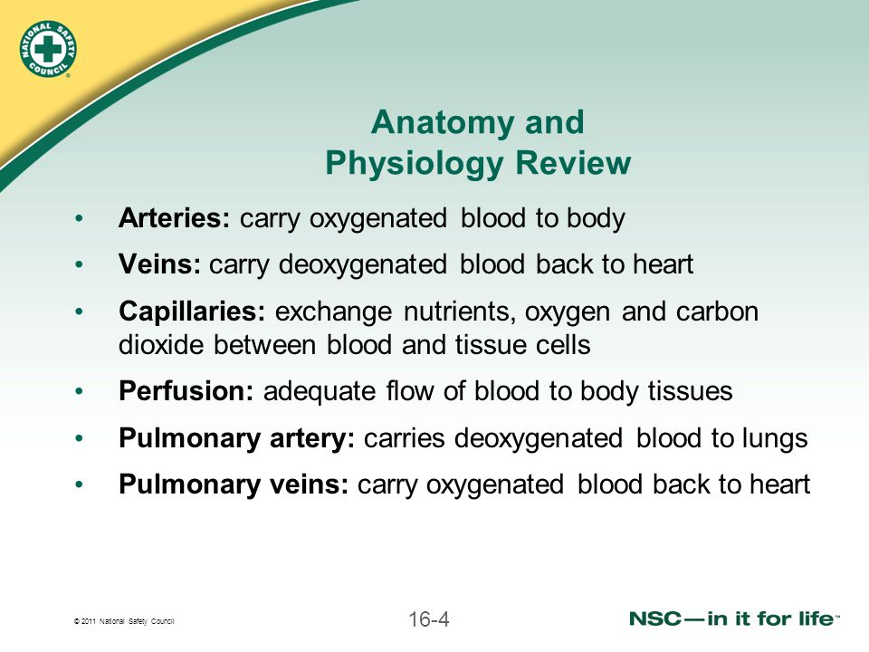 © 2011 National Safety Council 16-4 Anatomy and Physiology Review Arteries: carry oxygenated blood to body Veins: carry deoxygenated blood back to hea