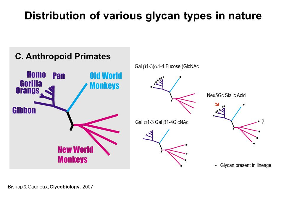Bishop & Gagneux, Glycobiology, 2007 Distribution of various glycan types in nature