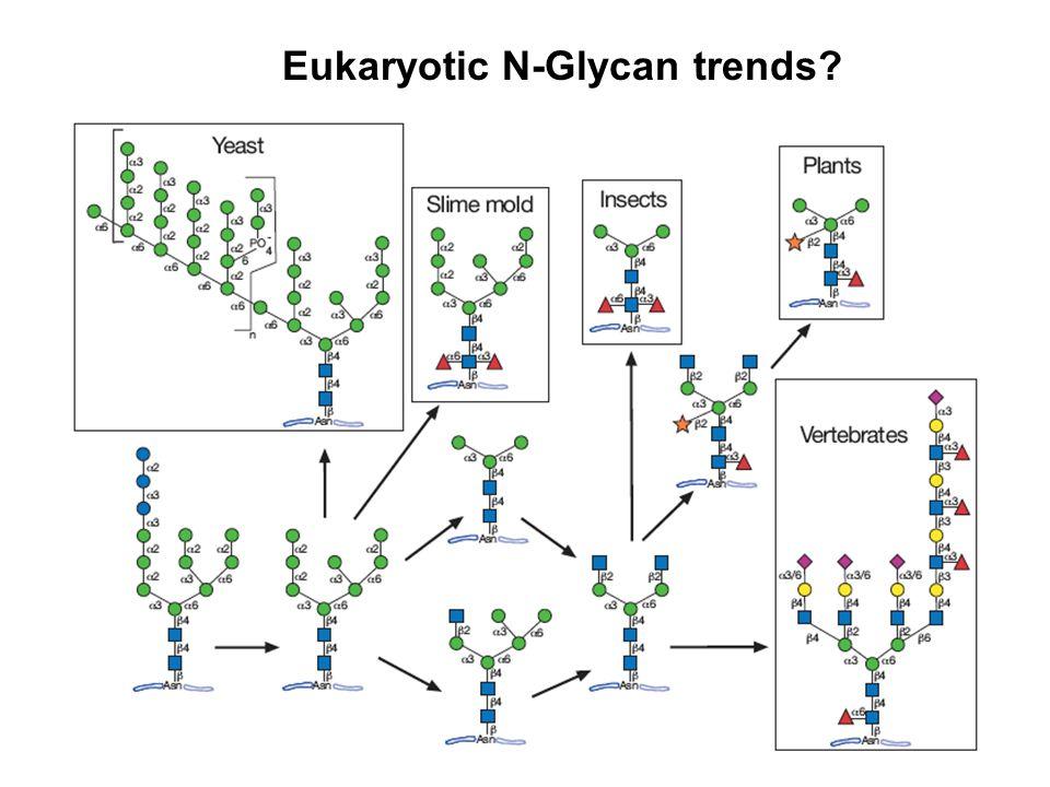 Eukaryotic N-Glycan trends