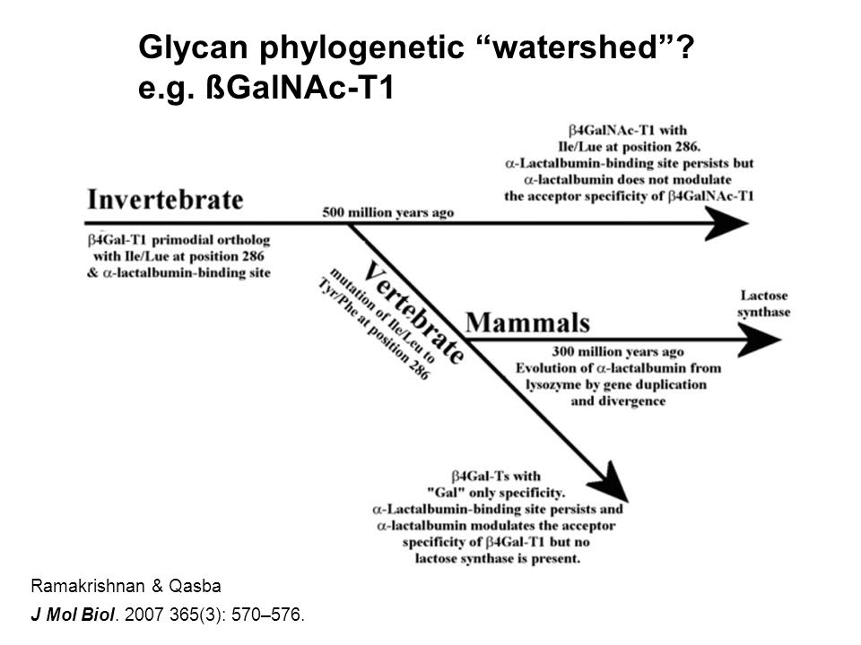 Ramakrishnan & Qasba J Mol Biol. 2007 365(3): 570–576.
