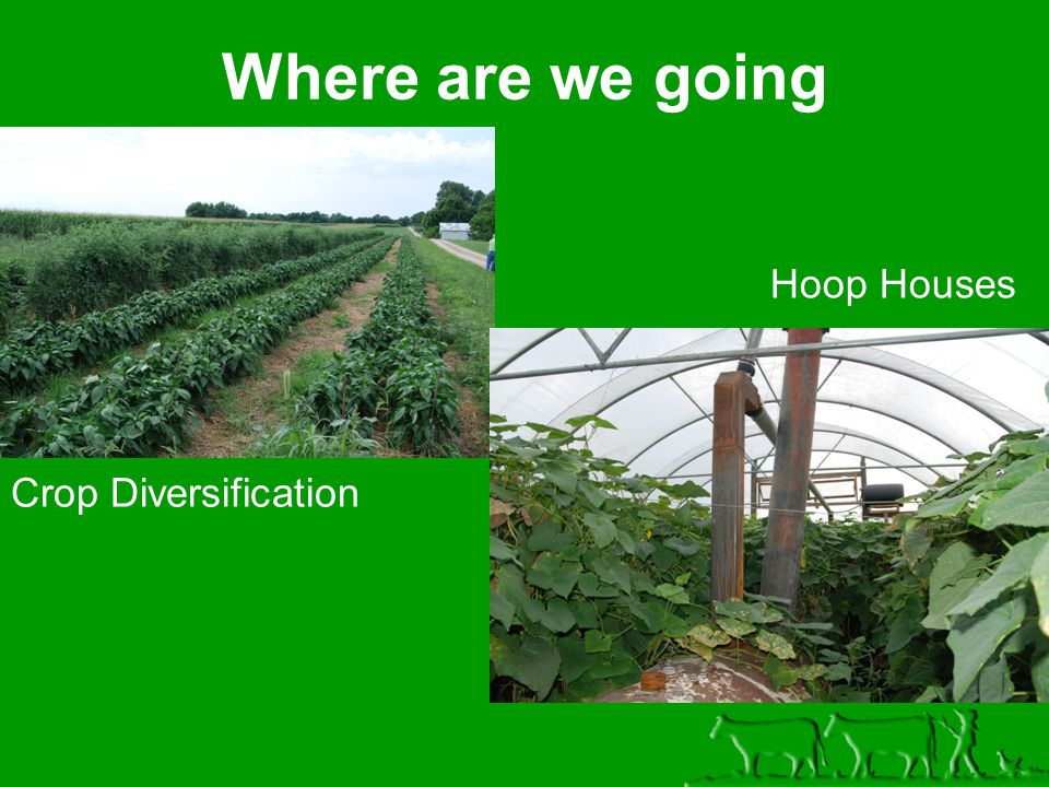 Where are we going Crop Diversification Hoop Houses
