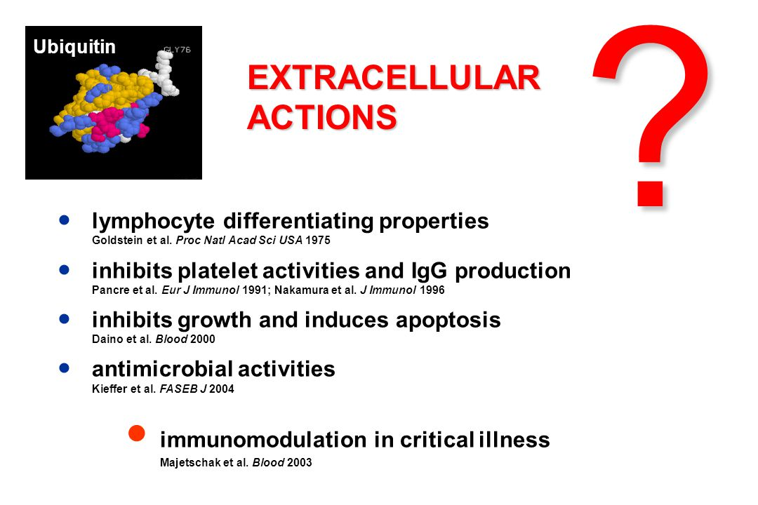 EXTRACELLULARACTIONS ● lymphocyte differentiating properties Goldstein et al.
