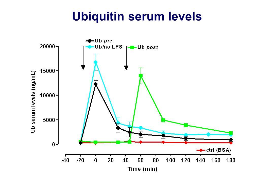Ubiquitin serum levels