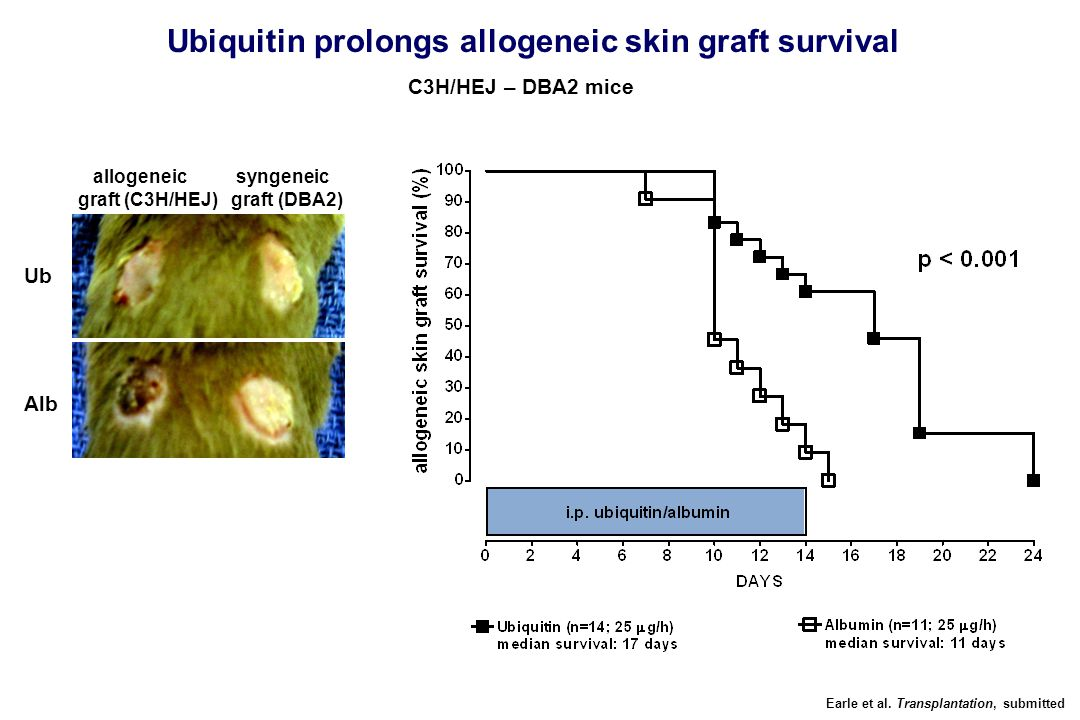 Ub Alb Earle et al. Transplantation, submitted Ubiquitin prolongs allogeneic skin graft survival allogeneic syngeneic graft (C3H/HEJ) graft (DBA2) C3H
