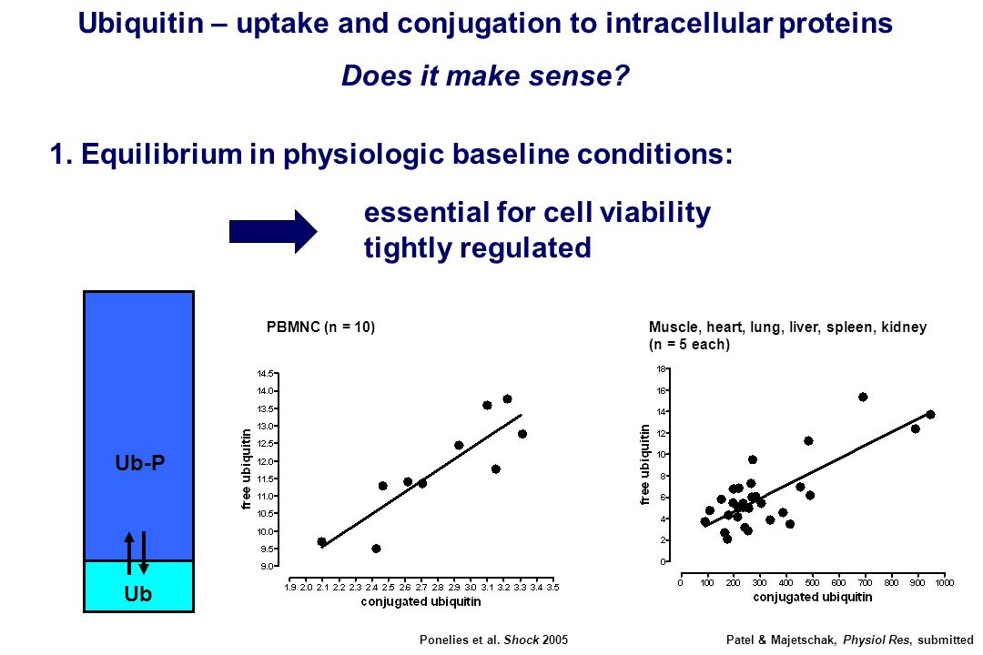 Ubiquitin – uptake and conjugation to intracellular proteins Does it make sense? 1. Equilibrium in physiologic baseline conditions: Ub Ub-P essential