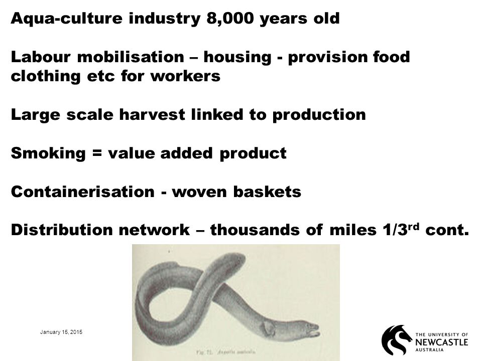January 15, 2015 24 Aqua-culture industry 8,000 years old Labour mobilisation – housing - provision food clothing etc for workers Large scale harvest linked to production Smoking = value added product Containerisation - woven baskets Distribution network – thousands of miles 1/3 rd cont.