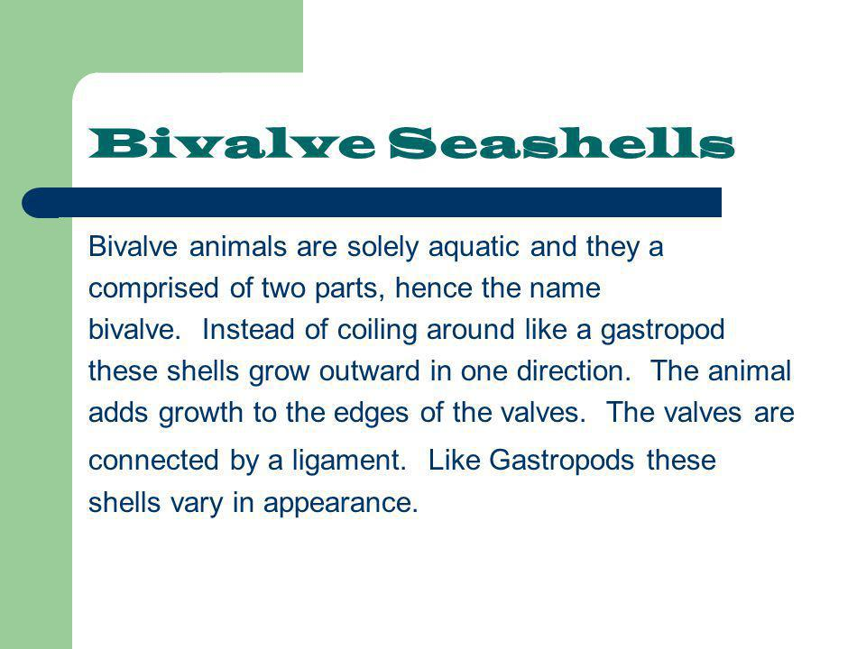 Bivalve Seashells Bivalve animals are solely aquatic and they a comprised of two parts, hence the name bivalve. Instead of coiling around like a gastr