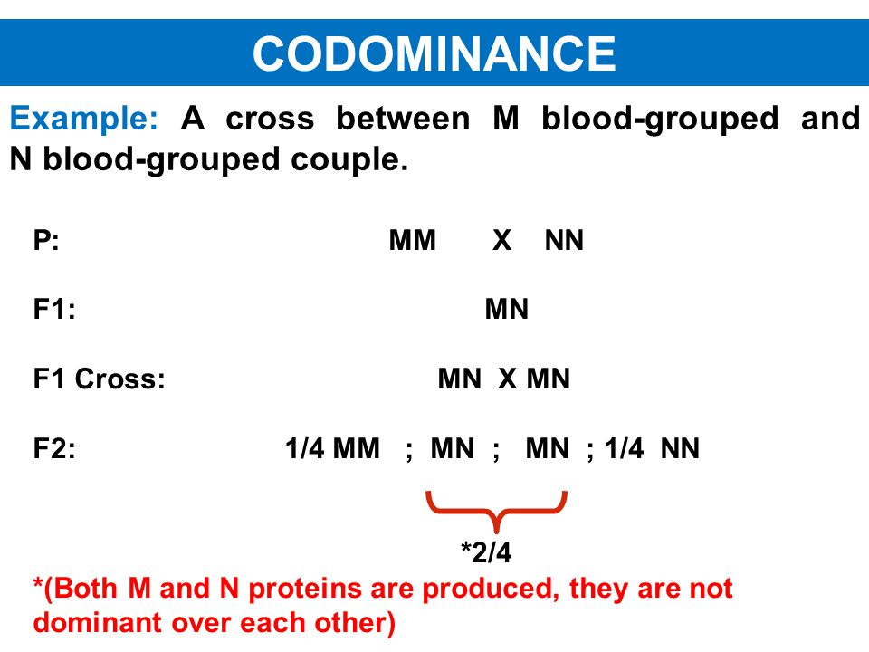 Example: A cross between M blood-grouped and N blood-grouped couple. P: MM X NN F1: MN F1 Cross: MN X MN F2: 1/4 MM ; MN ; MN ; 1/4 NN *2/4 *(Both M a