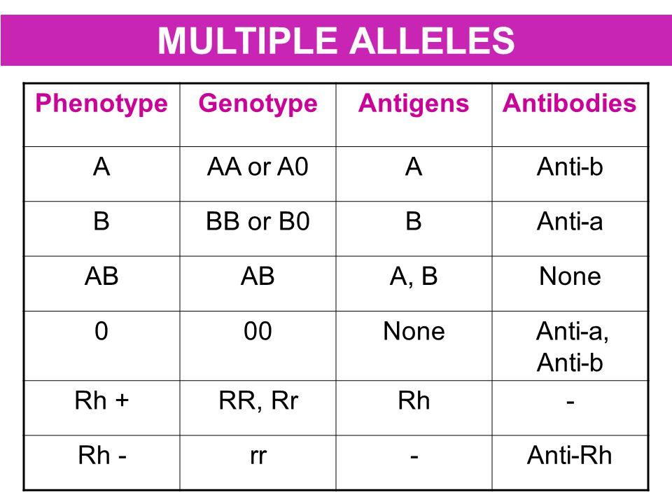 MULTIPLE ALLELES PhenotypeGenotypeAntigensAntibodies AAA or A0AAnti-b BBB or B0BAnti-a AB A, BNone 000None Anti-a, Anti-b Rh +RR, RrRh- Rh -rr-Anti-Rh