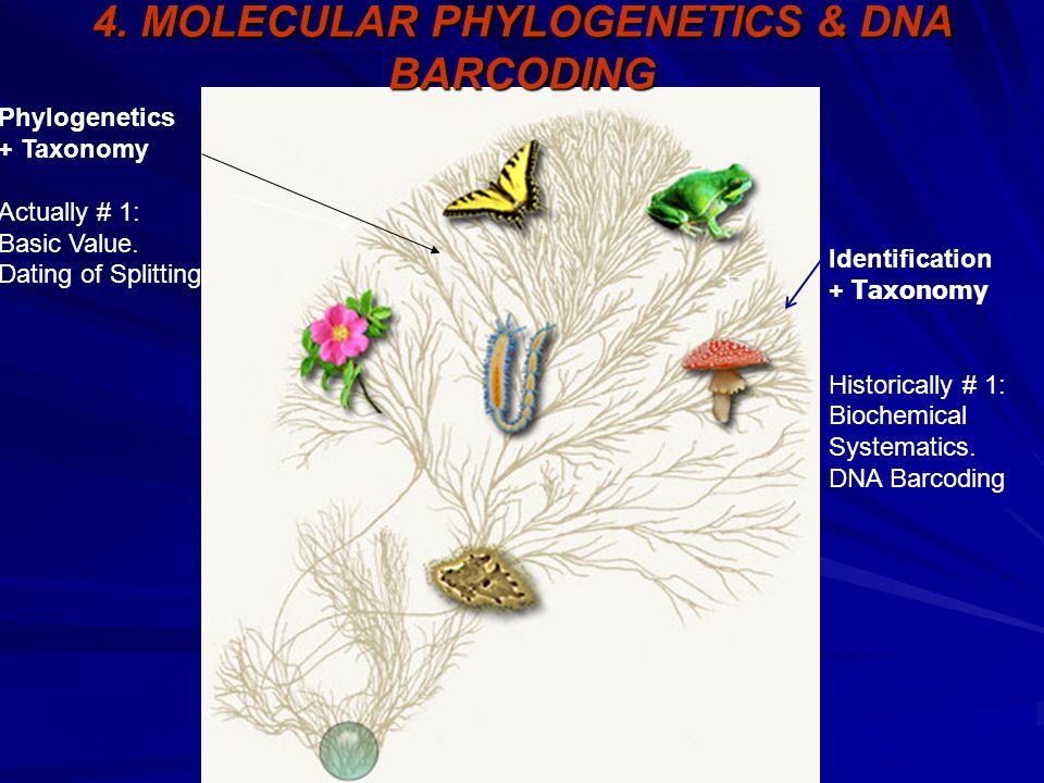 Identification + Taxonomy Historically # 1: Biochemical Systematics. DNA Barcoding Phylogenetics + Taxonomy Actually # 1: Basic Value. Dating of Split