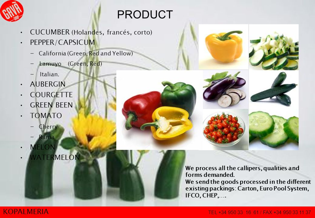 7 PRODUCT CUCUMBER (Holandes, francés, corto) PEPPER/CAPSICUM - California (Green, Red and Yellow) - Lamuyo (Green, Red) - Italian. AUBERGIN COURGETTE