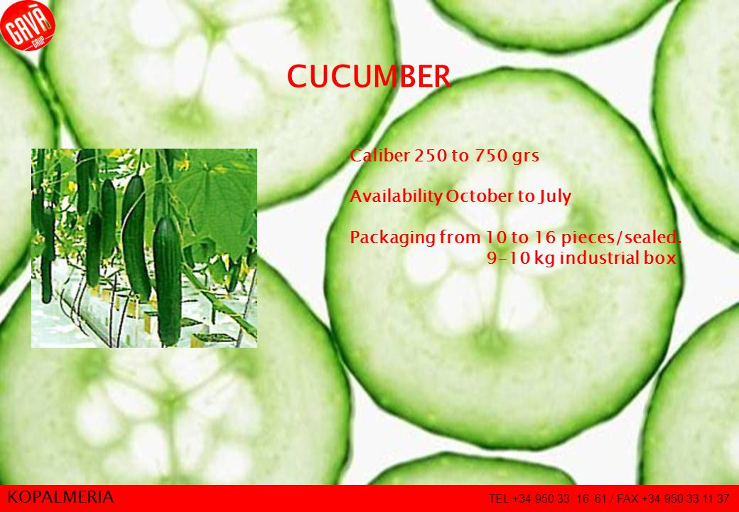 8 CUCUMBER Caliber 250 to 750 grs Availability October to July Packaging from 10 to 16 pieces/sealed.