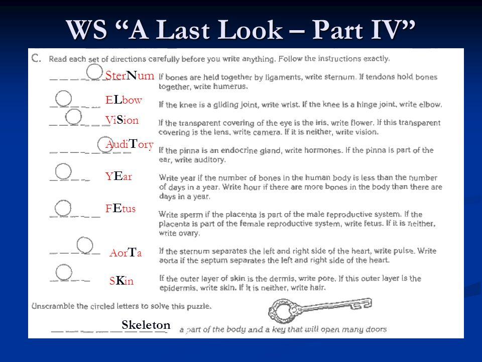 WS A Last Look – Part IV SterNum E L bow Vi S ion Audi T ory Y E ar F E tus Aor T a S K in Skeleton