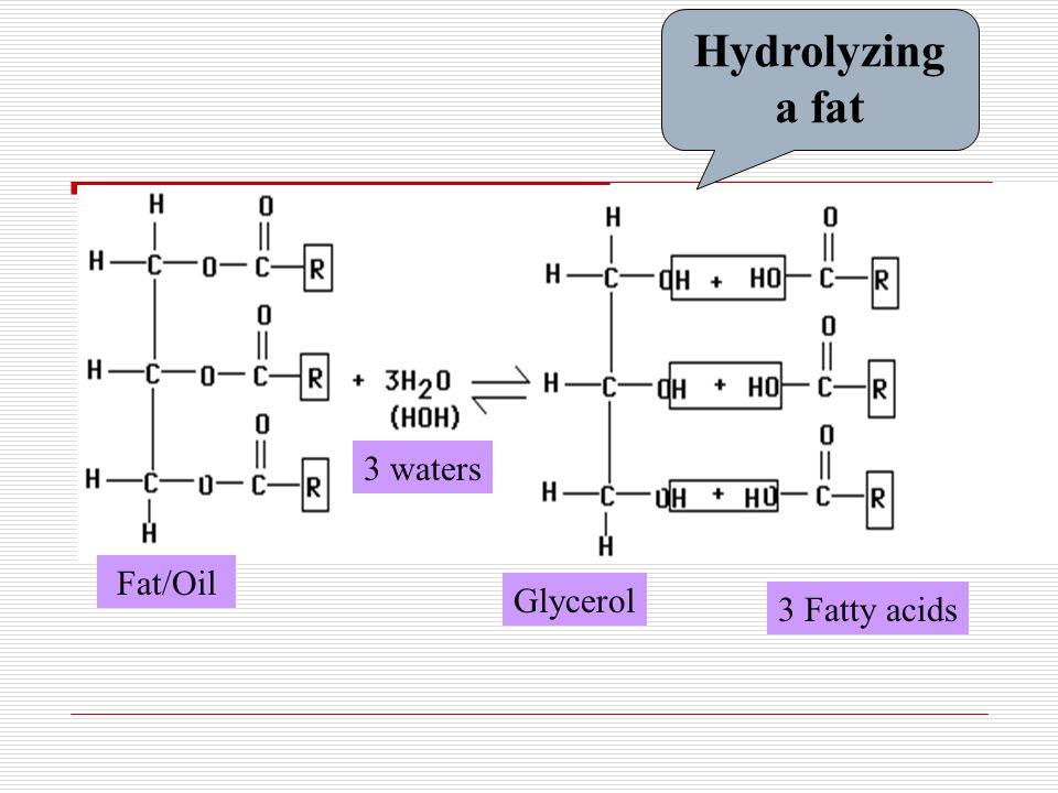 Fat/Oil Glycerol 3 Fatty acids 3 waters Hydrolyzing a fat