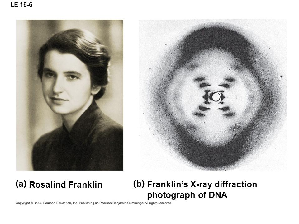LE 16-6 Franklin's X-ray diffraction photograph of DNA Rosalind Franklin