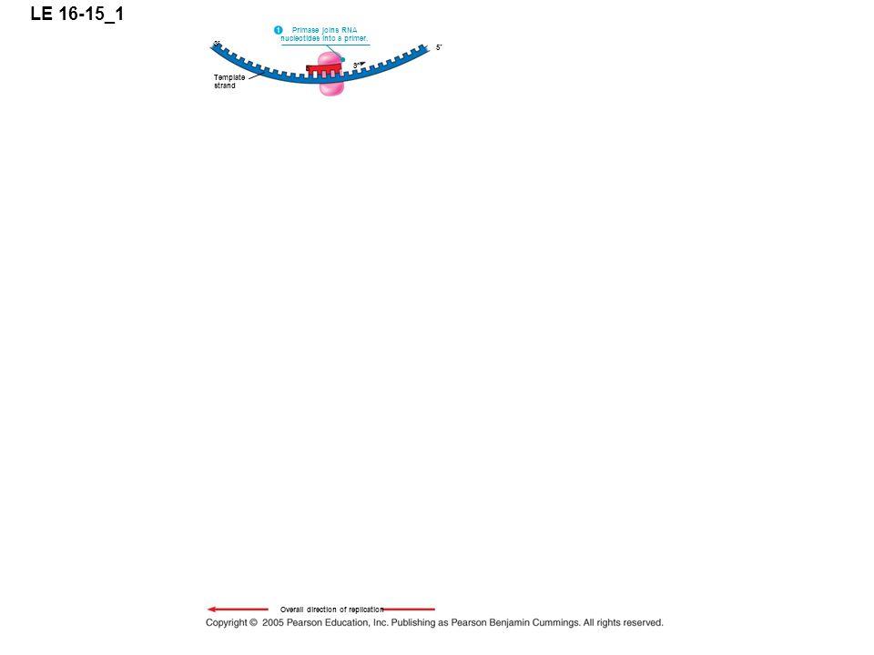 LE 16-15_1 5 3 Primase joins RNA nucleotides into a primer.