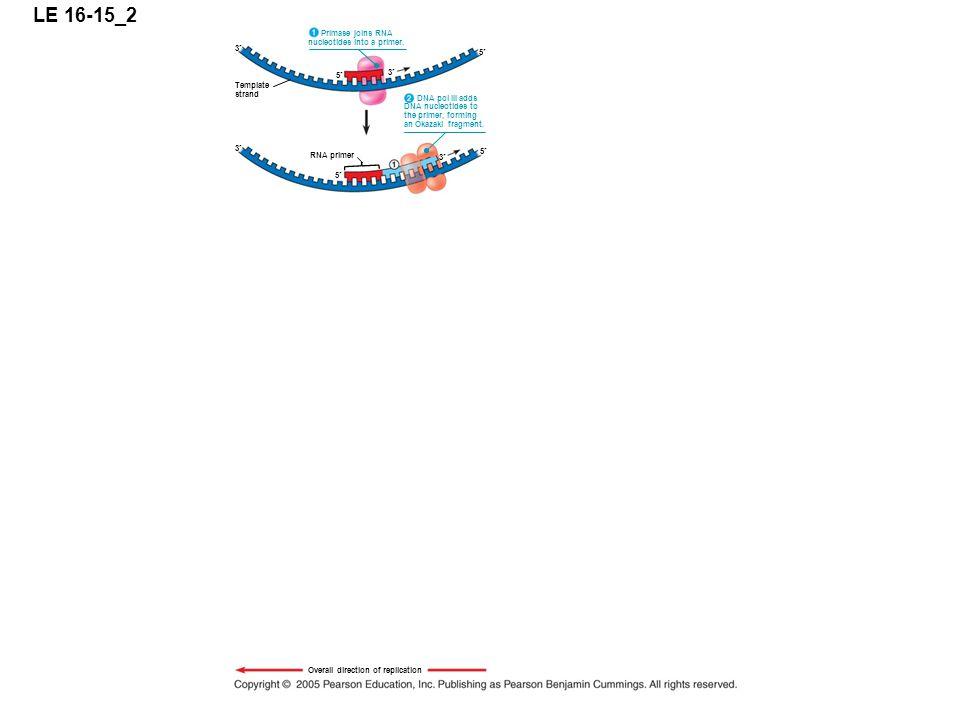 LE 16-15_2 5 3 Primase joins RNA nucleotides into a primer.