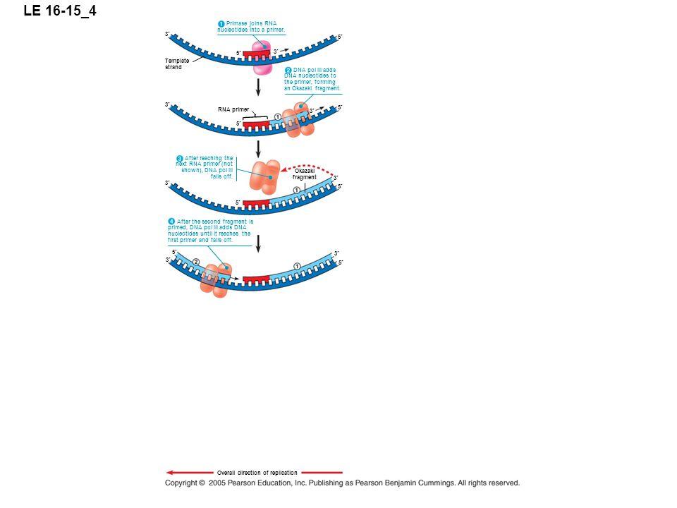 LE 16-15_4 5 3 Primase joins RNA nucleotides into a primer.