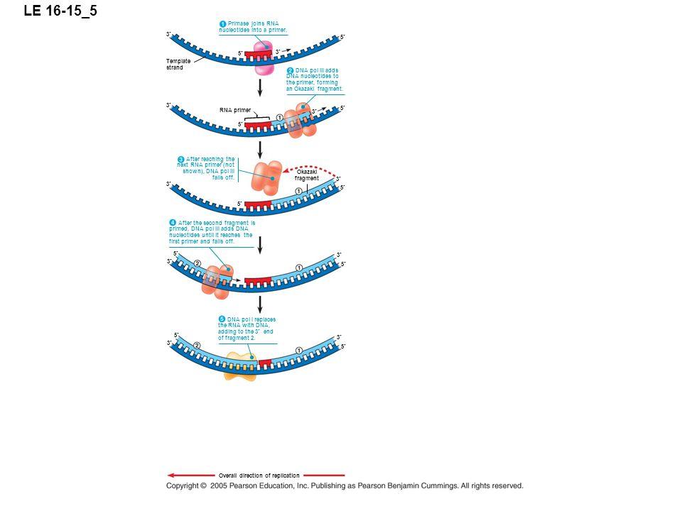 LE 16-15_5 5 3 Primase joins RNA nucleotides into a primer.