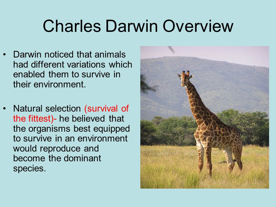 Charles Darwin Overview Darwin noticed that animals had different variations which enabled them to survive in their environment. Natural selection (su