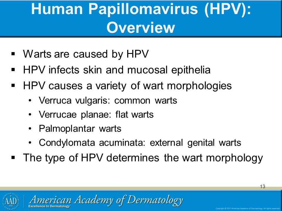 Human Papillomavirus (HPV): Overview  Warts are caused by HPV  HPV infects skin and mucosal epithelia  HPV causes a variety of wart morphologies Ve