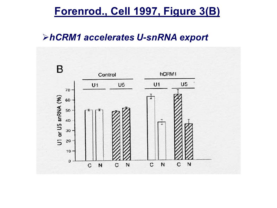 Forenrod., Cell 1997, Figure 3(B)  hCRM1 accelerates U-snRNA export