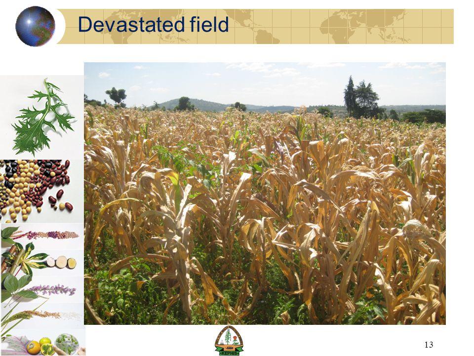 Devastated field 13
