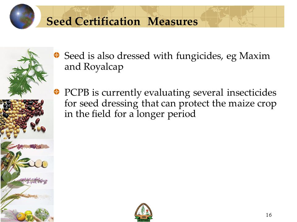 Seed Certification Measures Seed is also dressed with fungicides, eg Maxim and Royalcap PCPB is currently evaluating several insecticides for seed dre