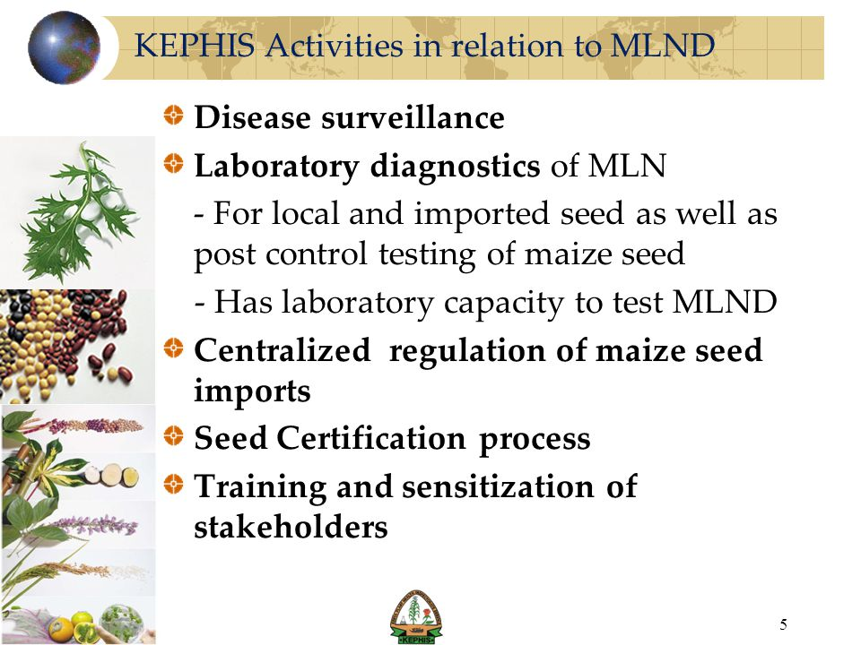 MLN Disease Surveillance KEPHIS has been involved in the collaborative field surveys e.g.