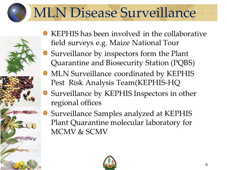 MLN Disease Surveillance KEPHIS has been involved in the collaborative field surveys e.g. Maize National Tour Surveillance by inspectors form the Plan