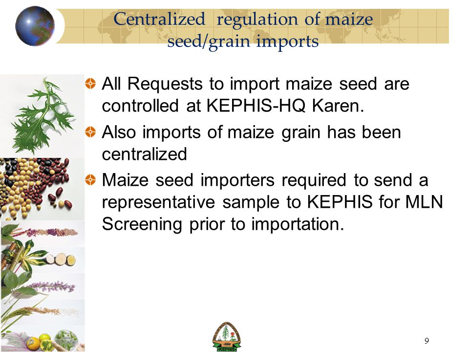 Centralized regulation of maize seed/grain imports All Requests to import maize seed are controlled at KEPHIS-HQ Karen. Also imports of maize grain ha