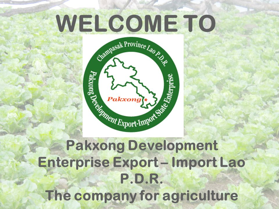 Pakxong Development Enterprise Export – Import Lao P.D.R. The company for agriculture WELCOME TO