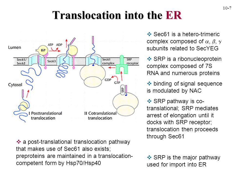 10-9 Folding in the Endoplasmic reticulum