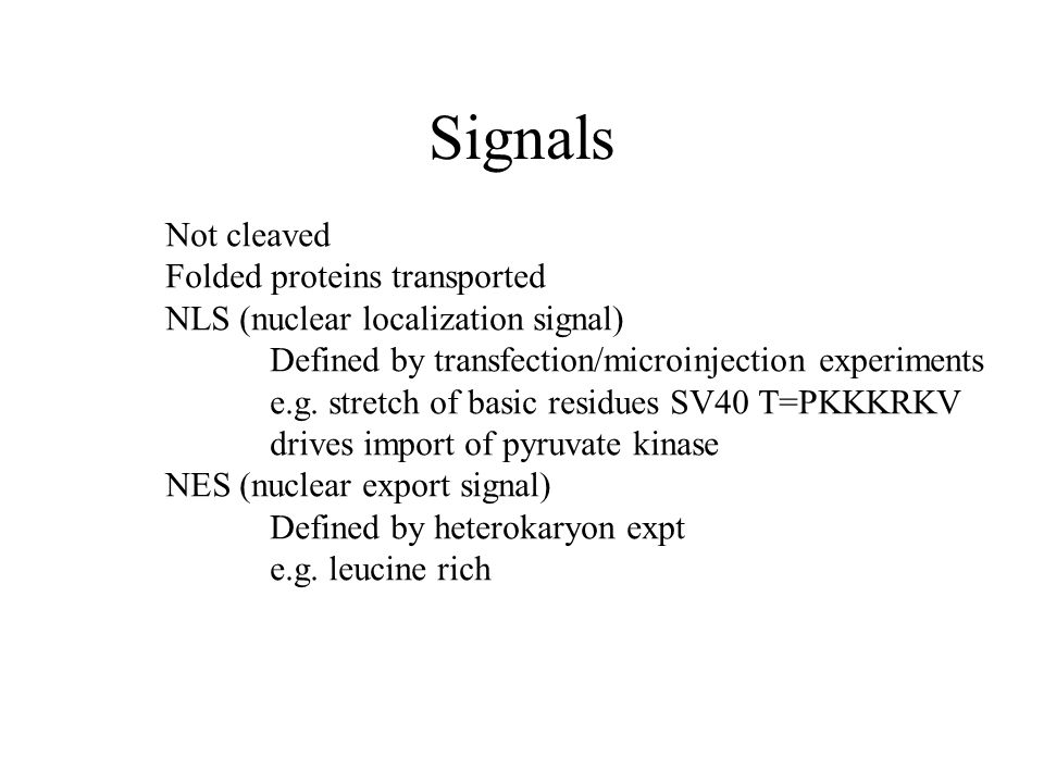 Not cleaved Folded proteins transported NLS (nuclear localization signal) Defined by transfection/microinjection experiments e.g.