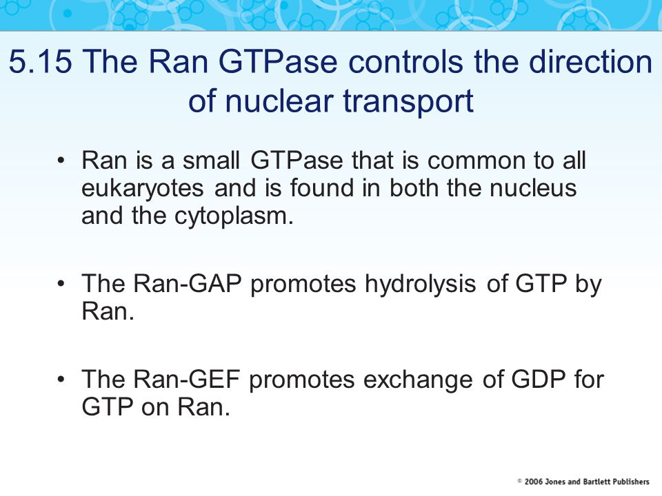 5.15 The Ran GTPase controls the direction of nuclear transport Ran is a small GTPase that is common to all eukaryotes and is found in both the nucleus and the cytoplasm.