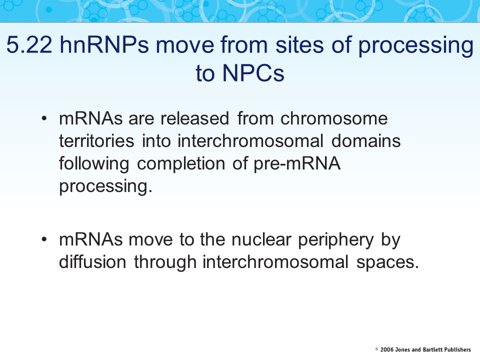 5.22 hnRNPs move from sites of processing to NPCs mRNAs are released from chromosome territories into interchromosomal domains following completion of pre-mRNA processing.