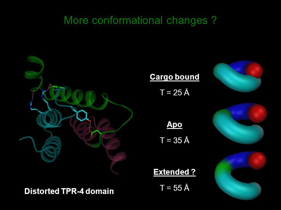 More conformational changes .Cargo bound T = 25 Å Apo T = 35 Å Extended .