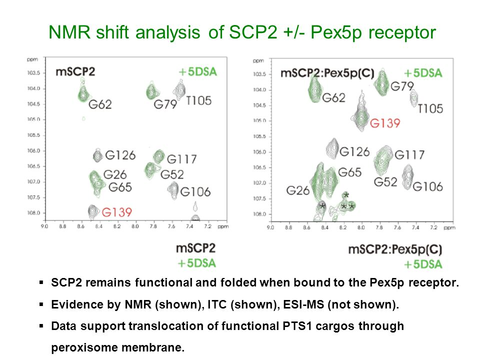 NMR shift analysis of SCP2 +/- Pex5p receptor  SCP2 remains functional and folded when bound to the Pex5p receptor.  Evidence by NMR (shown), ITC (s