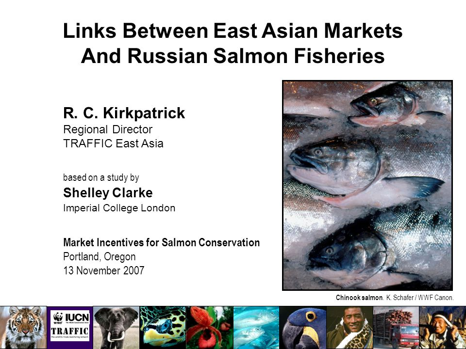 Links Between East Asian Markets And Russian Salmon Fisheries R.