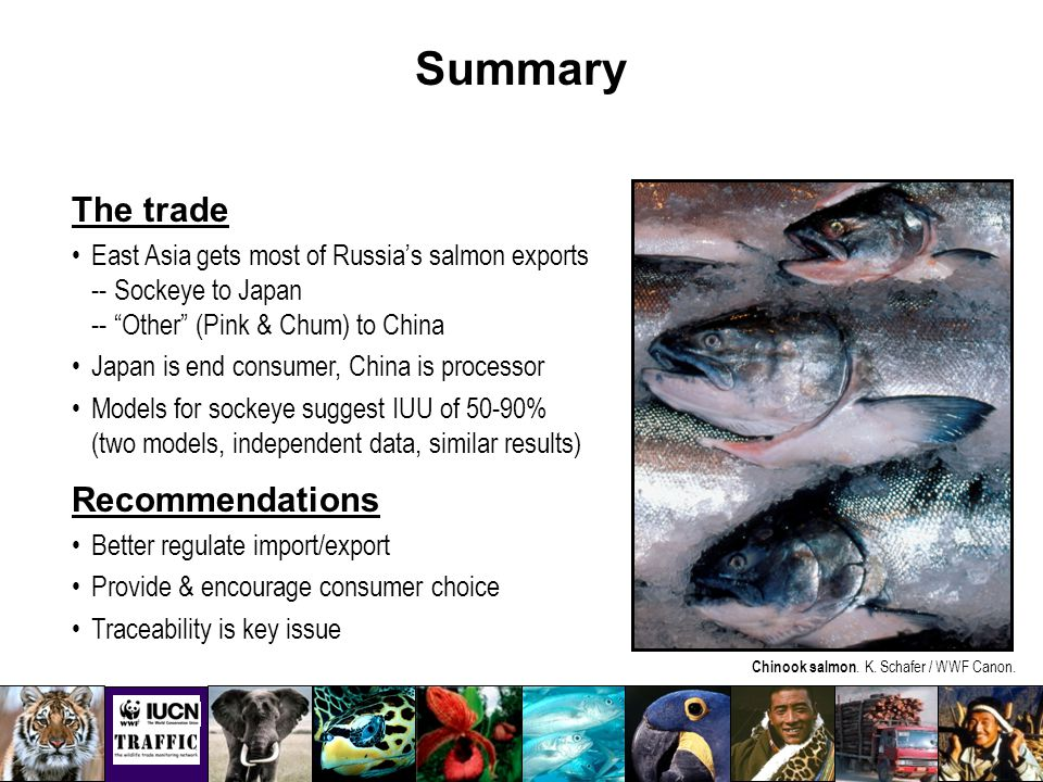 Summary The trade East Asia gets most of Russia's salmon exports -- Sockeye to Japan -- Other (Pink & Chum) to China Japan is end consumer, China is processor Models for sockeye suggest IUU of 50-90% (two models, independent data, similar results) Recommendations Better regulate import/export Provide & encourage consumer choice Traceability is key issue Chinook salmon.