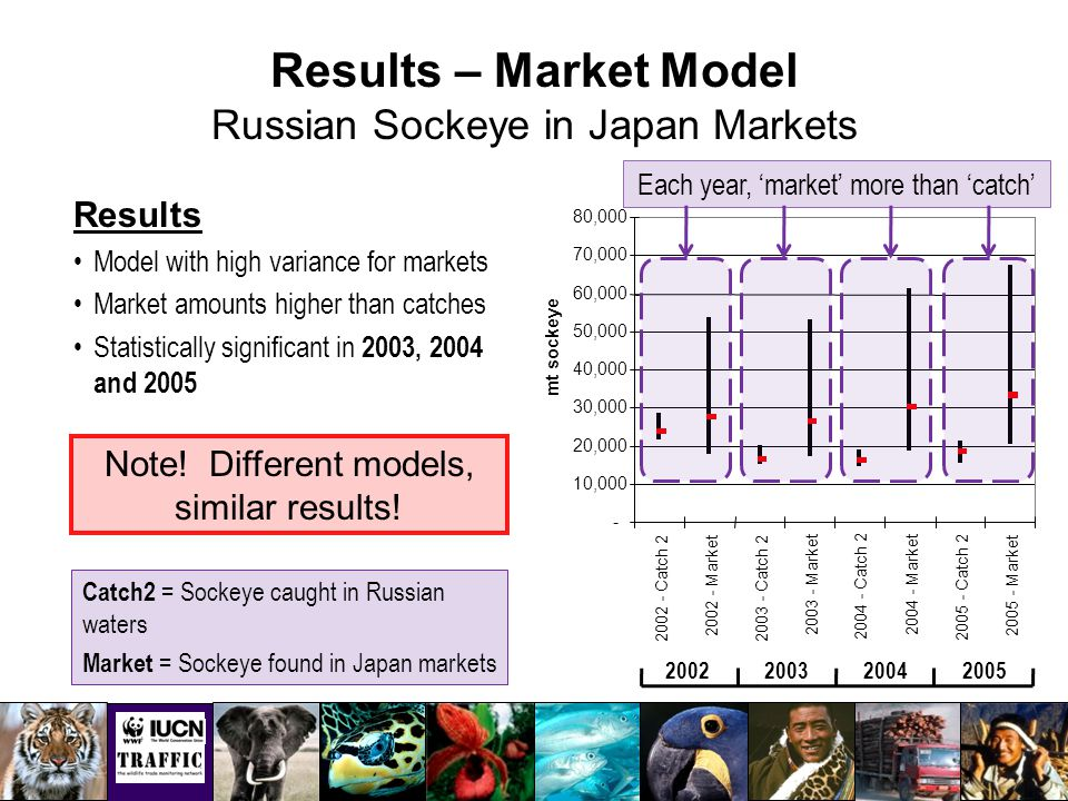 Results – Market Model Russian Sockeye in Japan Markets - 10,000 20,000 30,000 40,000 50,000 60,000 70,000 80,000 2002 - Catch 2 2002 - Market 2003 - Catch 2 2003 - Market 2004 - Catch 2 2004 - Market 2005 - Catch 2 2005 - Market mt sockeye 2002200320042005 Results Model with high variance for markets Market amounts higher than catches Statistically significant in 2003, 2004 and 2005 Catch2 = Sockeye caught in Russian waters Market = Sockeye found in Japan markets Each year, 'market' more than 'catch' Note.