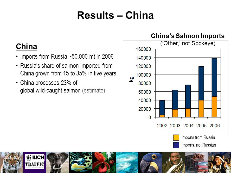 Results – China Imports from Russia Imports, not Russian China's Salmon Imports ('Other,' not Sockeye) China Imports from Russia ~50,000 mt in 2006 Russia's share of salmon imported from China grown from 15 to 35% in five years China processes 23% of global wild-caught salmon (estimate)