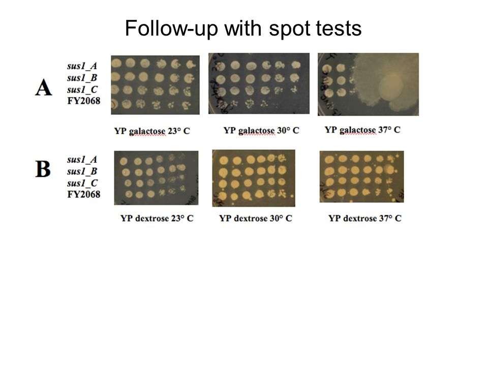 Follow-up with spot tests