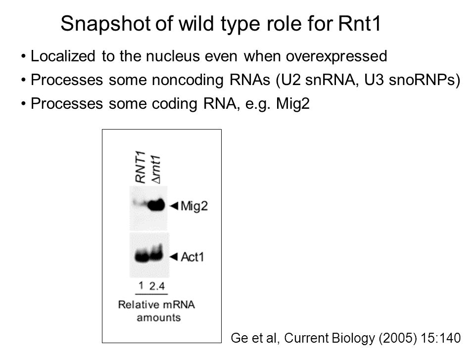 Specialized import into mitochondria protein:RNA conjugate Piggyback on tRNA import Bind to mtRNA binding protein