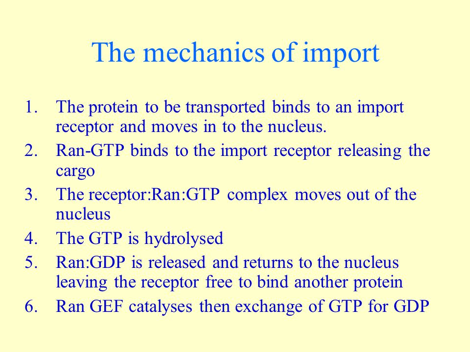 And of export 1.The empty export receptor enters the nucleus and binds the cargo protein and Ran:GTP.