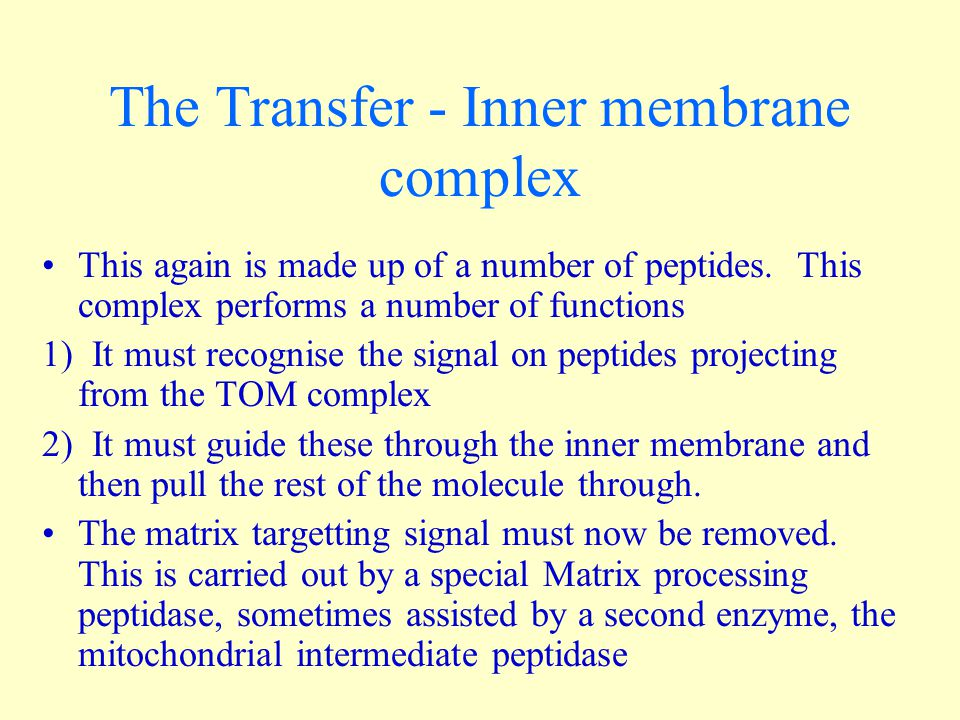 The Transfer - Inner membrane complex This again is made up of a number of peptides. This complex performs a number of functions 1) It must recognise